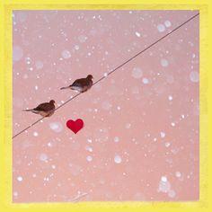 Items similar to Valentine - Romance - Love - Bird on Wire - Lovebirds- Original Fine Art Photograph - Morning Doves - Bird Photograph - Nature Photography on Etsy Kids Wall Murals, Murals Your Way, Murals For Kids, Dove Bird, Romance And Love, Snow Scenes, Holiday Time, Of Wallpaper, Art Studios