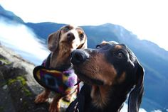 Dachshunds hiking the only trail in Olympic National Park open to dogs -The Spruce Railroad Trail - just days after it opened
