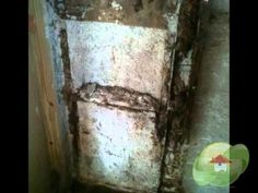 Mold Removal Contractor South Carolina You Can Connect With Us: Call Us: - Remove Black Mold Toxic Mold Symptoms, Black Mold Symptoms, Toxic Black Mold, Remove Black Mold, Mold Exposure, Mold Removal, Visit Website, South Carolina, Connection
