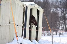 In many cases, a good shelter with adequate food is enough to keep horses warm during winter weather, researchers found.