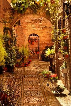 "A hidden ""Flowered"" corner in Tuscany"