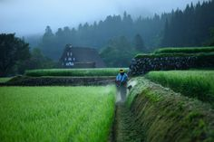 世界遺産の片隅で 夏の草刈り編