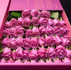 rosas rosas en caja...sarah fdez