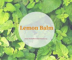 Lemon balm is a powerful herb that can combat viruses in the body and powerfully reduce anxiety.