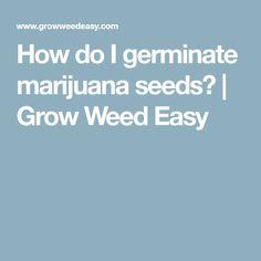 How do I germinate marijuana seeds? | Grow Weed Easy