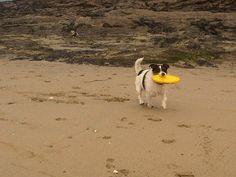 Crantock Beach Cornwall. Beautiful sandy beach which is dog friendly all year round