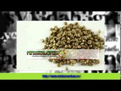 Grow Shop Sevilla   Semilla Canabis http://www.minigrowshop.es/  Mini Grow Shop en Sevilla - Cultura Natural y Positiva  Todo lo que necesitas para tu campaña de cultivo interior y exterior con unos precios increíbles situados en Sevilla Blog dedicado al mundo   del cannabis