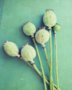 Poppy pods #patternpod #beautifulcolor #inspiredbycolor