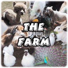 Farmyard Funworld
