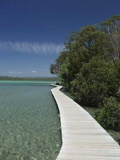 Merimbula Lake - Boa