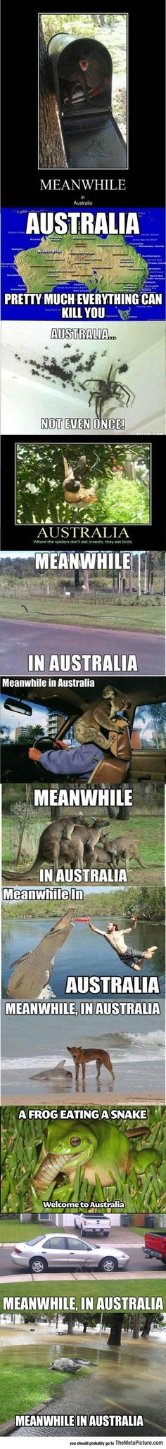 Some Truths About Australia. Funny and terrifying
