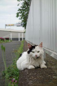 猫|ネコ|ねこの日々 | じぇいなすと、うちニャンズ+外猫いっぱい | ページ 2
