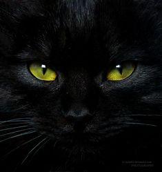 "darkface: "" black cat by "" Black Cat Art, Black Cat Eyes, Black Cats, Green Eyes, Black Kitty, Cool Cats, I Love Cats, Animals And Pets, Cute Animals"