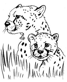 Wild animal coloring page | Cheetah Coloring page