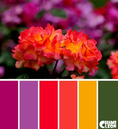 Color Palette, roses, purple, red, yellow.