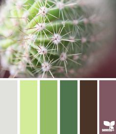 cactus hues color scheme from Design Seeds Colour Pallette, Color Palate, Colour Schemes, Color Combos, Pantone, Room Colors, House Colors, Cactus E Suculentas, Living Colors