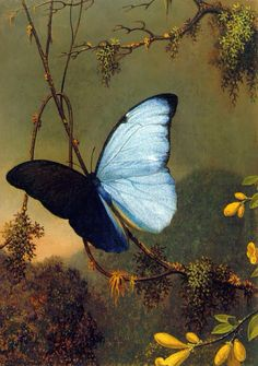 Blue Morpho Butterfly (detail), by Martin Johnson Heade, ca.1864-65