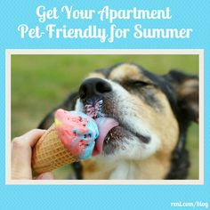 Help your pet experience relief from the dog days of summer by preparing your apartment for the hot weather.