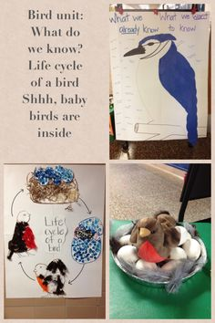 """Bird unit  Every unit I start day one asking the children """"what do we know"""" our previous knowledge. I base the curriculum on what needs I need to meet. In order to know what they are thinking also about the unit I ask what they want to learn through out the unit about the subject."""