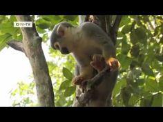 Amazon animal orphanage    pilpintuwasi butterfly farm