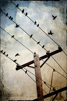 Telephone pole.  Birds on a wire.