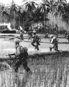 US Forces sweeping through paddy fields, Vietnam.