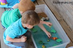 Create a sensory bin to learn all about frogs! Sensory Bins, Sensory Activities, Sensory Play, Toddler Activities, Toddler Play, Toddler Preschool, Preschool Ideas, Teaching Ideas, Lifecycle Of A Frog