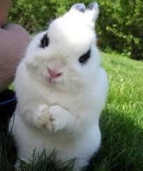 Resultado de imagen para Conejos tiernos