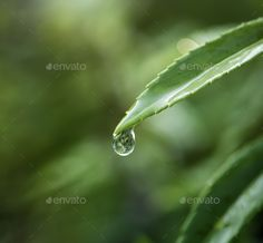 Closeup of water drop on leafs Free Photos, Free Images, Water Drop On Leaf, Design Plano, Landscape Sketch, Bride Of Christ, Water Drops, Close Up, Silver Rings