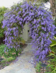 39 Beautiful Evergreen Vines Ideas For Your Home - Alles über den Garten Small Cottage Garden Ideas, Garden Cottage, Diy Garden, Garden Paths, Garden Beds, Garden Guide, Spring Garden, Shade Garden, Garden Tools