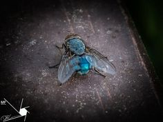 Bluebottle | by Munns Foto Turquoise Necklace, Photography Photos, Jewelry, Fashion, Nature, Jewellery Making, Moda, Jewellery, Jewelery