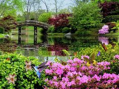Spring at the Lake GIF spring bridge nature flowers birds lake gif Beautiful Landscapes, Beautiful Gardens, Beautiful Flowers, Beautiful Pictures, Nature Gif, Nature Images, Pretty Gif, Moving Water, Garden Of Eden