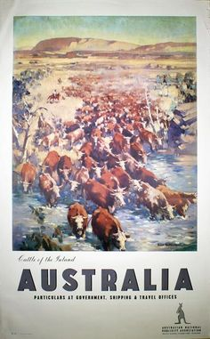 Australia. Alice Springs. Cattle of the Inland