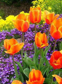 Spring at Manito Park, Spokane