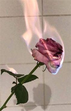 ❥ソロ審美的 # Novela Juvenil # amreading # books # wattpad flowers wallpaper dark Where stories live Tumblr Wallpaper, Flower Wallpaper, Wallpaper Backgrounds, Aesthetic Backgrounds, Aesthetic Iphone Wallpaper, Aesthetic Wallpapers, Tumblr Roses, Rose On Fire, Burning Rose