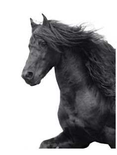 Friesian Premium by Melanie Snowhite. Print from Art.com, $39.99