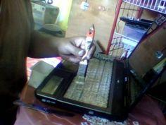 Repairing the Laptop Keyboard Doesn't Work