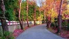 Fener Mahallesi; Zonguldak TURKEY Black Sea, The Province, Thesis, Sidewalk, Coast, World, Plants, Travel, Parks
