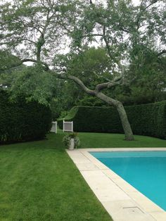 Aerin Lauder's pool.  The hedge is great.  The gate is cute.