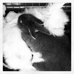 Bunnies cuddle together - May 18, 2012