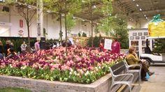 Pioneer Flower Farms: Tulip Garden