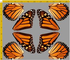 Orange Monarch Butterfly Fabric to Make by CraftyAnnesArtistry