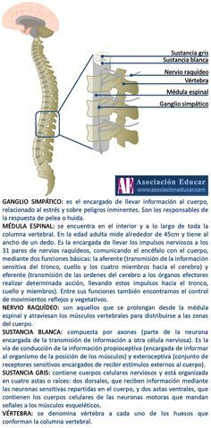 Médula espinal.