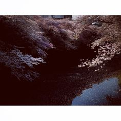 Spring has come Photo by Masataka Izawa