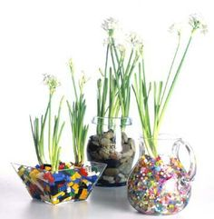 Paperwhites in glass
