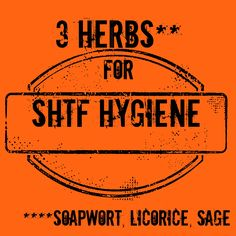 3 Herbs for SHTF Hygiene