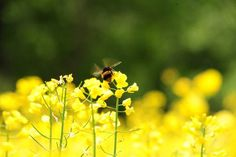 The bee population of Ireland is under threat because of the lack of wild flowers on farms, experts are warning.