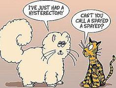 http://catexpert.blogspot.com/2013/07/facts-and-myths-about-feline-spaying.html  http://catexpert.blogspot.com/2013/07/facts-and-myths-about-feline-spaying.html