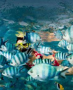 reef..