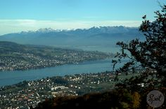 The Uetliberg offers a panoramic view of the entire city of Zurich, the Lake of Zurich and the Swiss alps #zurichspots #swissspots
